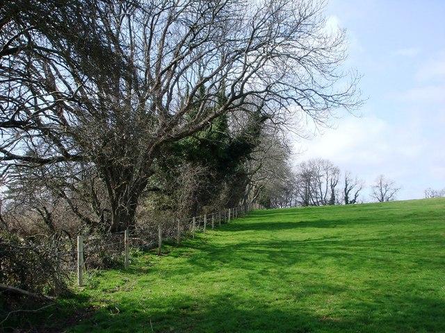 Trees near Manor Farm, Galmpton Creek