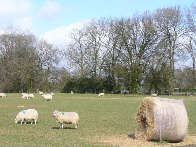 Sheep Grazing South-west of Monkwood