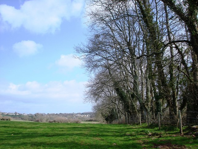 A fine stand of trees near manor farm above Galmpton Creek
