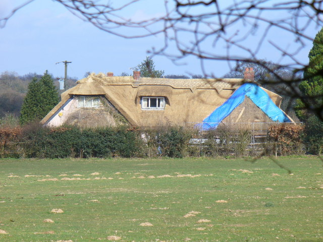 Thatching on Brewers Lane