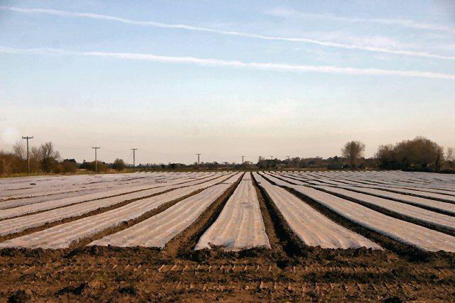 Plastic fields at Mildenhall Fen