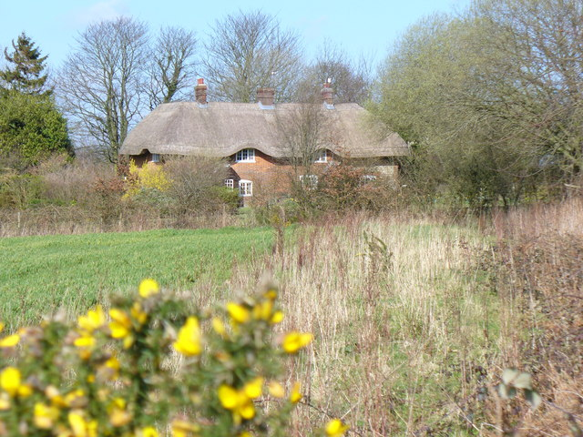 Thatched Cottages, Colemore Common