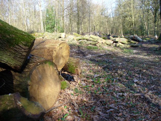 Woodpiles, Monkwood