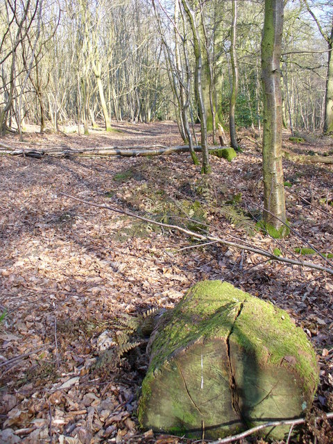Forest Track, Monkwood