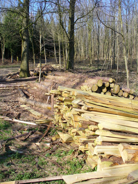 Logpile by Monkwood
