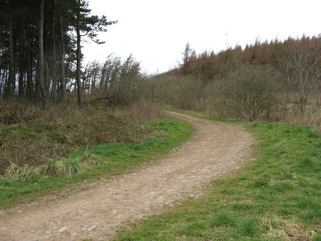 Forest road, Langton Edge
