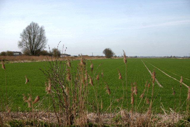 Farmland at Decoy Fen