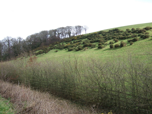 Hillside beside A30