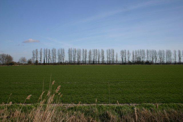 Farmland at Sedge Fen