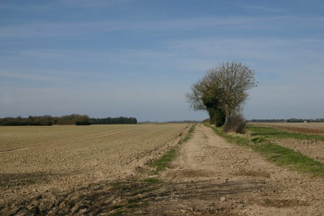 Track to Chalk Farm, Undley