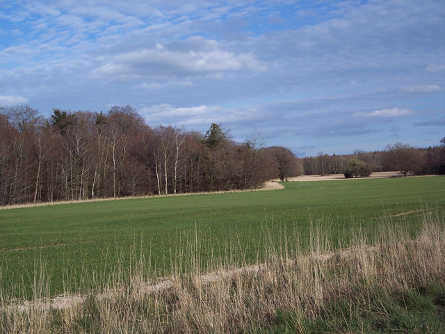 View across the park, St Giles Estate