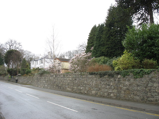 Flowering magnolias and Victorian mansions in Ffordd Telford