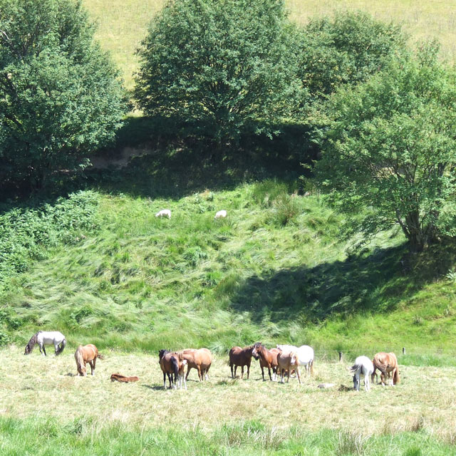 Horses Grazing near Dolgoch Youth Hostel, Ceredigion