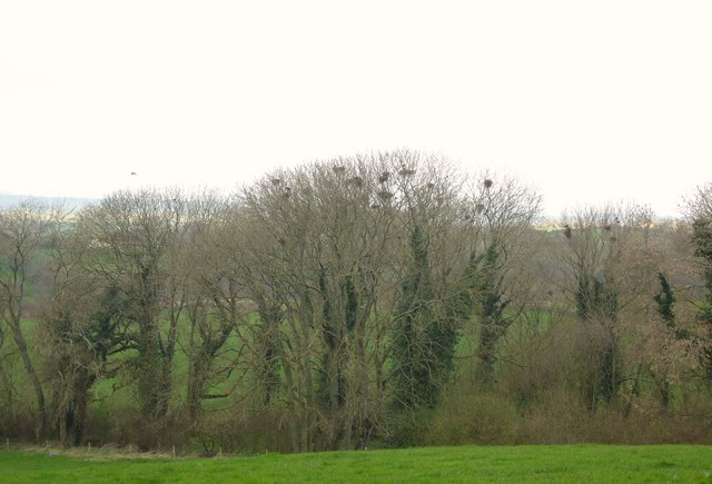 Spring Copse with Rookery