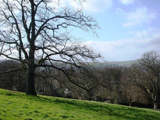 Oak Tree above Greenway House