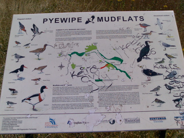 Pyewipe Mudflats Bird Guide