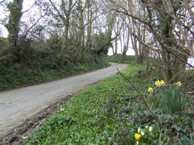 Spring flowers by the lane
