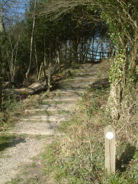 The Steps at Thistle Hill
