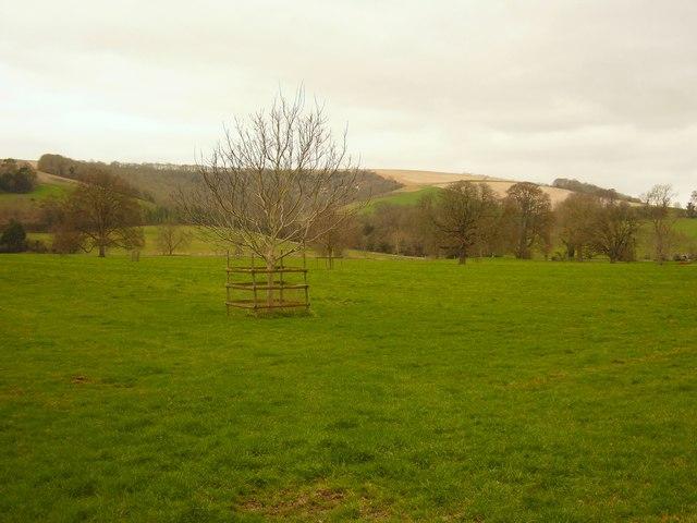 Parkland near Shroton