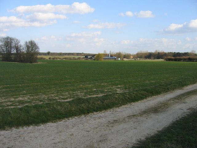 Arable land towards Markshall Game Farm