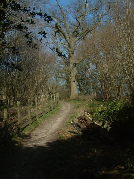 Bridleway near Round Wood