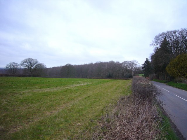 Field by Bushes Road