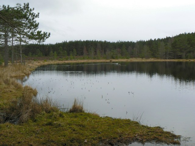 Lochan in the forest