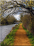 SU5566 : Cranwell Bridge: Kennet and Avon Canal by Pam Brophy