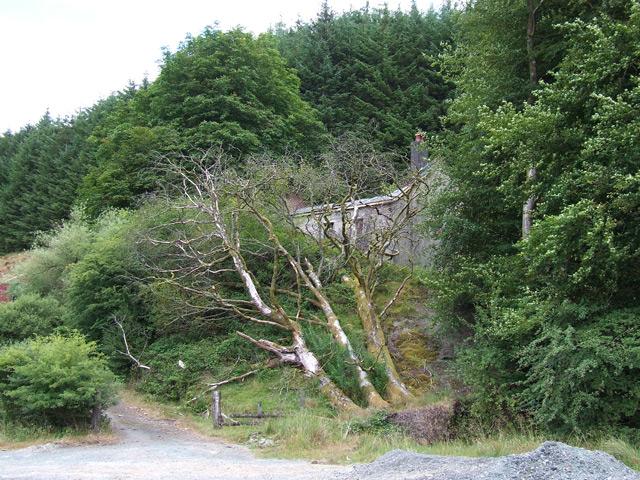 Nantyrhwch - near Dolgoch, Powys