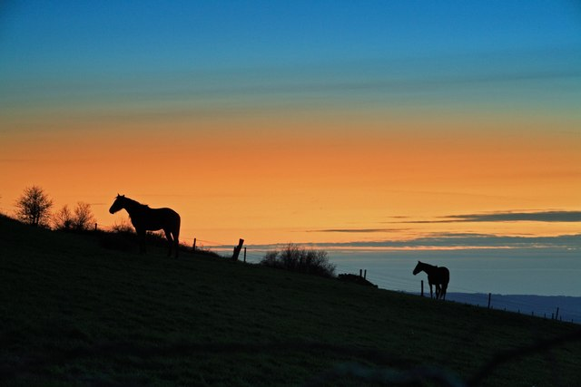 Horses at sunset Okeford Hill