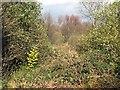 SX0456 : Starrick Moor by Tony Atkin