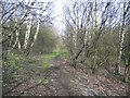 Dist:0.5km<br/>This footpath, which has just left the River Dee appears to be in a tranquil woodland setting, however, just out of sight it is very industrial.