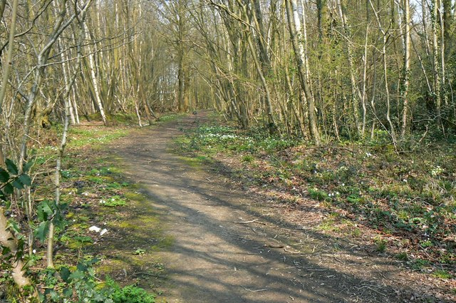 Footpath into Legg's Wood