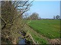 SJ6969 : Puddington Brook by michael ely