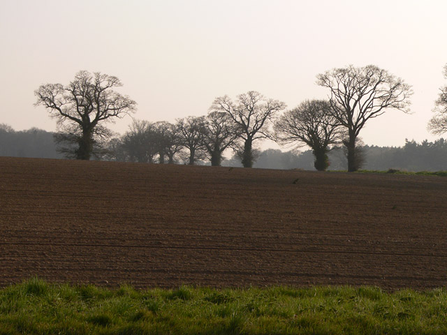 Ploughed field and trees