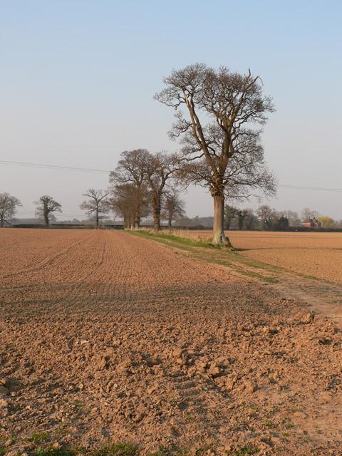 Trees and farmland
