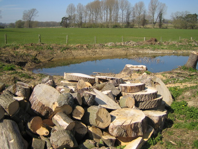 A dead tree reduced to logs - and a new pond