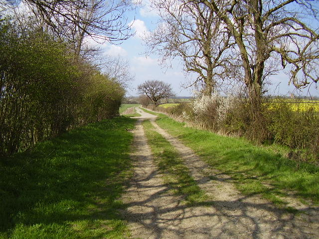 Byway from Loveden Hill