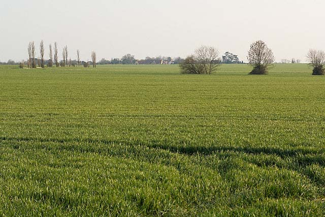 Manor Farm fields, Needingworth