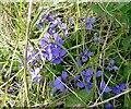 TL0826 : Wildflower by John Yaxley