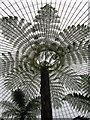 NS5667 : Kibble Palace Tree Fern by wfmillar