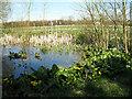 SP8426 : Pond near Bury Farm by Martin Addison