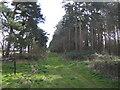 TF8005 : Plantation on Cockleycley Heath. by Jonathan Billinger