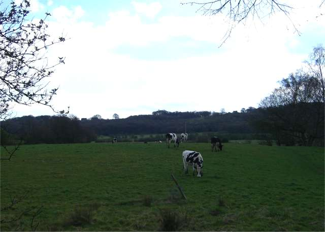 Across the fields to Burgess's Wood