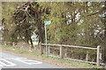 NZ1542 : Footpath through woodland Hedley Hill by P Glenwright