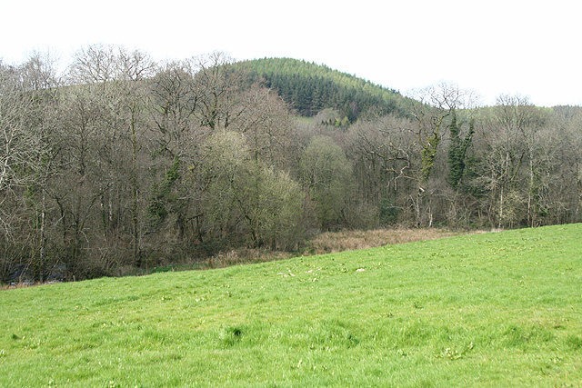 South Molton: towards Hacche Wood