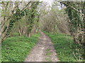 SP5629 : Bridleway into Stoke Bushes by Jonathan Billinger