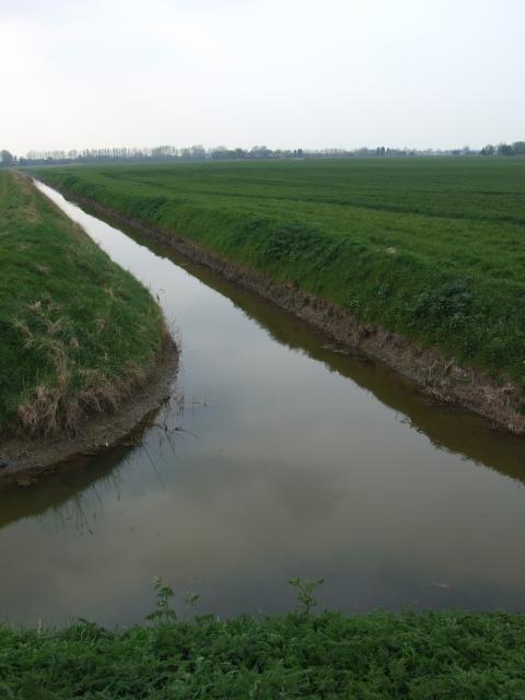 Land Drain, Binnimoor Fen, March