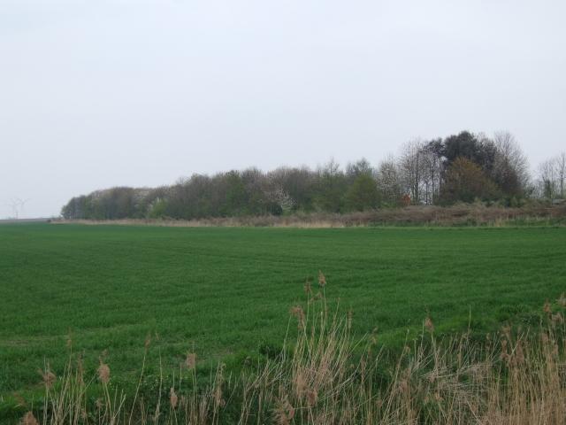 Dunham's Wood, March