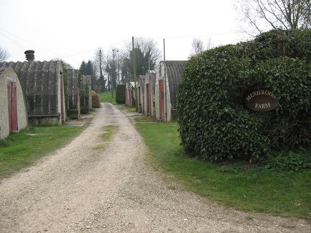 The Mushroom Farm, Rockbourne